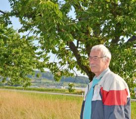 Karl Wüst steht vor seinen komplett leer geräumten Chriesibäumen im Birrfeld.